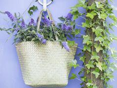 Hangmanden met bloeiende perkplanten zijn typisch Engels. Daarom kennen we ze ook bij ons onder de naam 'hanging basket'. In ons tuincentrum zijn ze in verschillende maten te koop. Aan u de plezierige taak om ze naar eigen smaak te vullen en een mooie plek te geven aan een muur, schutting of pergola. Deze tips helpen u op weg…