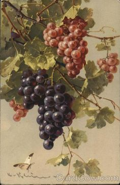 Purple and Red Grapes C. Klein Fruit