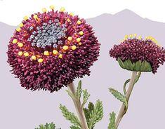 Alpine Plants, Postage Stamps, Nativity, Dandelion, Flora, Coins, Profile, Behance, Gallery