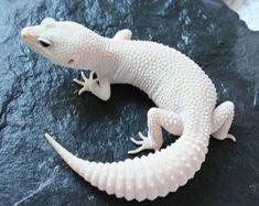 🔥Click the image to see more. Les Reptiles, Cute Reptiles, Reptiles And Amphibians, Leopard Gecko Cute, Cute Gecko, Leopard Gecko Morphs, Leopard Gecko Terrarium, Terrarium Reptile, Rare Albino Animals