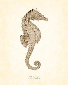 Vintage Seahorse in Sepia Natural History Art Print 8 x 10. $10.00, via Etsy.