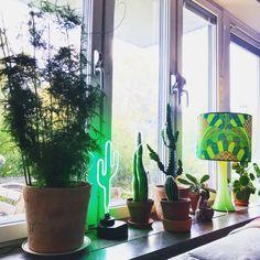 Retro, plants, greenplants, cactus, interior, window, fönster, window sill Window Sill, Cactus, Planter Pots, Windows, Interior Design, Retro, Nest Design, Home Interior Design, Rustic
