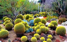 Un jardin de cactus puede ser la respuesa ideal si usted necesita rediseñar el jardín y está buscando plantas que no requieran de demasiados cuidados.