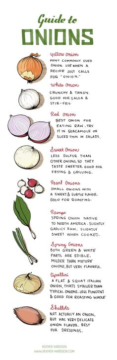 All you ever need to know about onions. Bonus tip: For ease of handling & perfect slices, leave the root end on the onion until you make the last cut, then throw it into the compost bin.