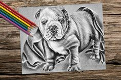 Bulldog coloring book pages adult coloring by ArtistrybyLisaMarie