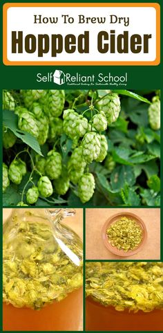How to brew a dry hopped cider - plus we talk about the varieties and forms of h. - How to brew a dry hopped cider – plus we talk about the varieties and forms of hops. Chorizo, Homemade Alcohol, Homemade Cider, Brew Your Own Beer, Brewing Supplies, Beer Brewing Kits, Brew Pub, How To Make Beer, Cake Mix Cobbler