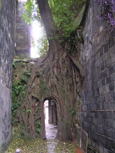 Root-choked doorway between two buildings in Jiaocheng, Ningde, Fujian, China The Places Youll Go, Places To See, A Level Art, Asia, Wild Nature, Heaven On Earth, Doorway, Landscape Photos, Mother Nature