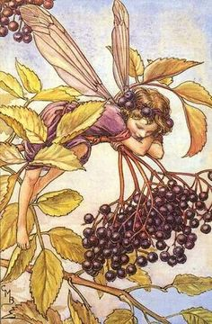 Cicely Mary Barker.  Elderberry fairy.