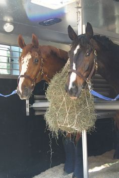 Traveling with Your Horse? Reduce the Red Tape   SmartPak Equine Blog