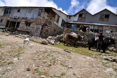 Nepal, Mount Everest, Trek, Camel, Animals, Travel Scrapbook, Travel, Animales, Animaux