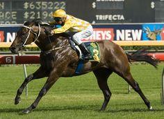 Fusaichi Pegasus - 2000 Kentucky Derby winner.