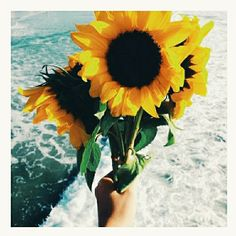 If I were a flower.. I would be a sunflower. To always follow the sun, Turn my back to darkness, Stand proud, tall and straight even with my head full of seeds.