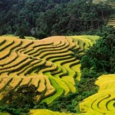 Rice Terraces in Dong Van - Vietnam adventure tours offered by Vktour.com