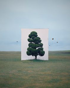 Gorgeous photographs of trees - the familiar in an unfamiliar way.