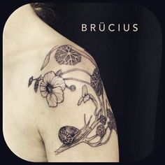 SF. Brucius