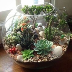 DIY Terrarium Succulents Picture Showing for Mini Succulents Garden Ideas DIY Succulent Plants - Garten Cactus Terrarium, Terrarium Design, Garden Terrarium, Terrarium Centerpiece, Glass Terrarium Ideas, Terrarium Wedding, Cacti Garden, Making A Terrarium, Terrarium Decorations