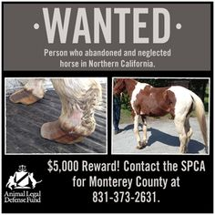 Please share! Stop animal abuse!!
