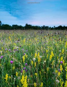 The Meadow: An English Meadow Through the Seasons