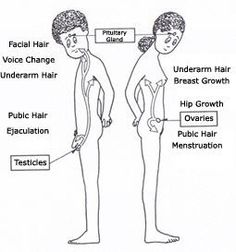 Prepare Your Daughter For These Puberty Changes #Puberty
