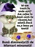 Clara Alonso, Morning Greetings Quotes, Super Funny, Motto, Good Morning, Humor, Cool Stuff, Cards, Cat Breeds