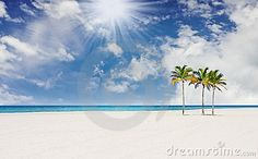 Tropical Beach With  Palm Trees In Miami Florida - Download From Over 47 Million High Quality Stock Photos, Images, Vectors. Sign up for FREE today. Image: 12399110
