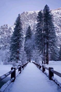 Winter wonder...