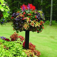 30 Seeds/pack Mix Coleus Seeds Rare Flower Seeds Diy Home Garden Plant Easy To Grow