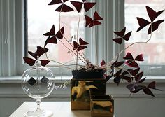 Oxalis Triangularis - the leaves open and close like butterflies <3