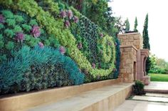 Amazing succulent wall! ...looks like a castle!
