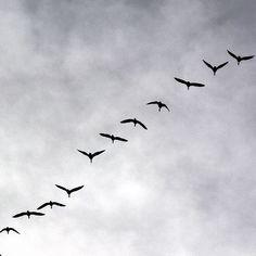 #signsofspring #migratingbirds #migratinggeese #geese #zugvögel #gänse #frühlingsboten #keväänmerkki #muuttolinnut #hanhet #whppatterns Instagram Posts, Deco, Pictures