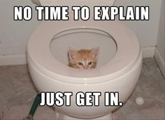 Funny Cat Photo: Here, Kitty, Kitty ??? Maybe not right now...