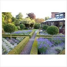 lavender with box hedge - Google Search