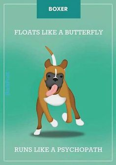 Boxers are funny runners