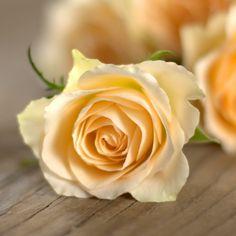 simpatias para emagrecer: simpatia com Rosas