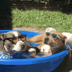 Is this a private pool party or can anyone join in? https://plus.google.com/115485979219209097599/posts/jKutuvncabc