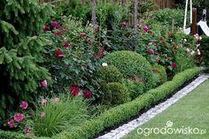 Ogród dla roślin o mocnych nerwach - strona 531 - Forum ogrodnicze - Ogrodowisko