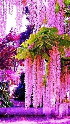 Beautiful Flowers Garden, Amazing Flowers, Pretty Flowers, Beautiful Gardens, Cascading Flowers, Unusual Flowers, Beautiful Nature Wallpaper, Beautiful Landscapes, Wisteria Tree