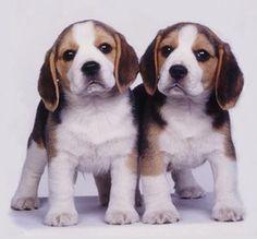 I just wanna take them home!!!