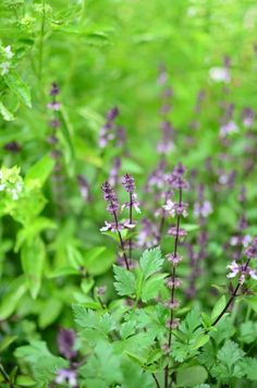 8 Culinary Herbs for the Shade Garden -- I can't wait to get planting these this year!  Read the post from Reformation Acres here -->http://www.reformationacres.com/2014/03/8-culinary-herbs-for-the-shade-garden.html