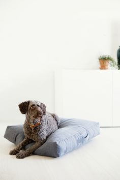 Looking for a luxury or cute pet bed for your pampered pooch or cute kitty? Fluffy Bedding, Pet Beds, Dog Accessories, Dog Design, Doge, Good Night Sleep, Scandinavian Design, Chair Design, Dog Love