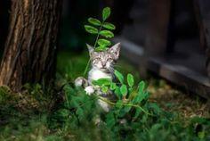 http://gobtube.com Sniper cat