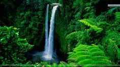 Waterfall in Forest Background HD Wallpaper Green Nature Wallpaper, Forest Wallpaper, Of Wallpaper, Beautiful Wallpaper, Landscape Wallpaper, Nature Album, All Nature, Nature Sounds, Nature Pics
