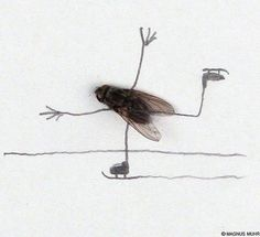 doodles with dead flies...this is kind of gross and funny at the same time. Tee hee!