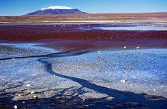 Red Lake: Laguna Colorada, Bolivia © tigric (Ana Stefanović)