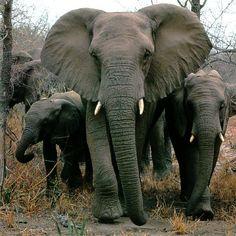 elephant - Buscar con Google