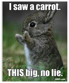 ❤ www.LHDC.com ❤ Loves the little guys! No lie..