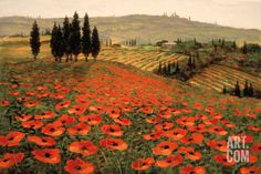 Don't love, but we like the contrast in colors.   Hills of Tuscany I Art Print by Steve Wynne at Art.com