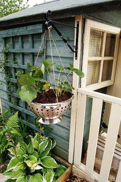 colander hanging basket
