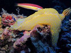 Nudibranquio - Palma Aquarium