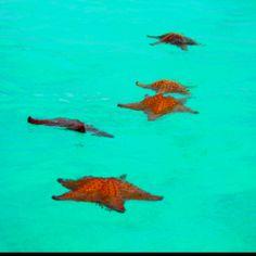 Sea Stars - Bahamas
